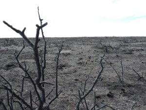 Controlan incendio en Playas Doradas